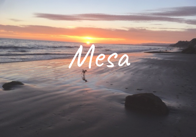 Learn more about the history of the Mesa neighborhood in Santa Barbara, homes for sale, recent sales, and market updates.