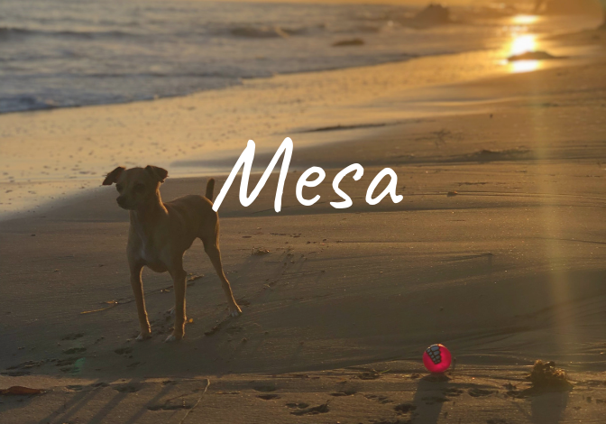 Learn more about the history of the Mesa neighborhood in Santa Barbara, homes for sale, recent sales, market updates, and off market listings.