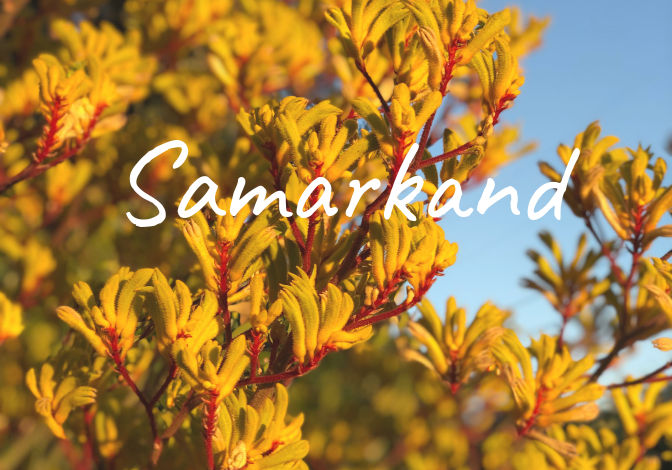 Learn more about the history of the Samarkand neighborhood in Santa Barbara, homes for sale, recent sales, market updates, and off market listings.